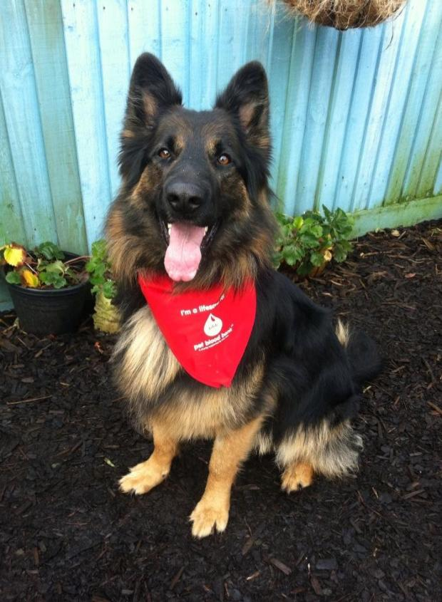 Penarth Times: Donor dog Jack