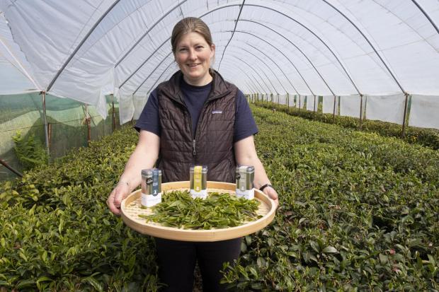 Penarth Times: Lucy George of Peterston Tea Estate