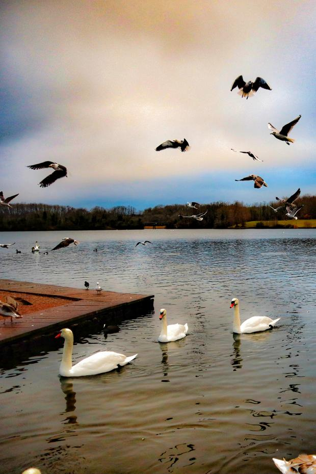 Penarth Times: Cosmeston Lakes Country Park. Picture: Sameer Gangoli