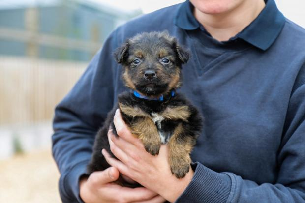 Penarth Times: SWEET: Puppy Huw is camera ready