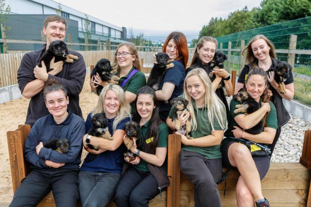 Penarth Times: And they called it puppy love!