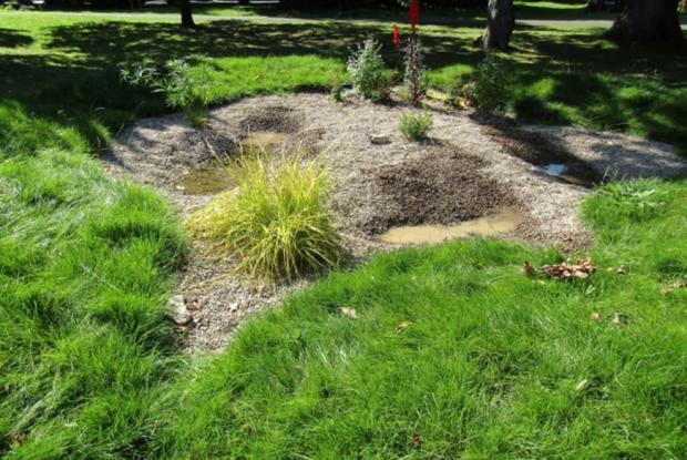 Penarth Times: The bog garden at Victoria Square in Penarth