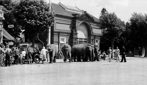 Anyone remember the march of the elephants in town?