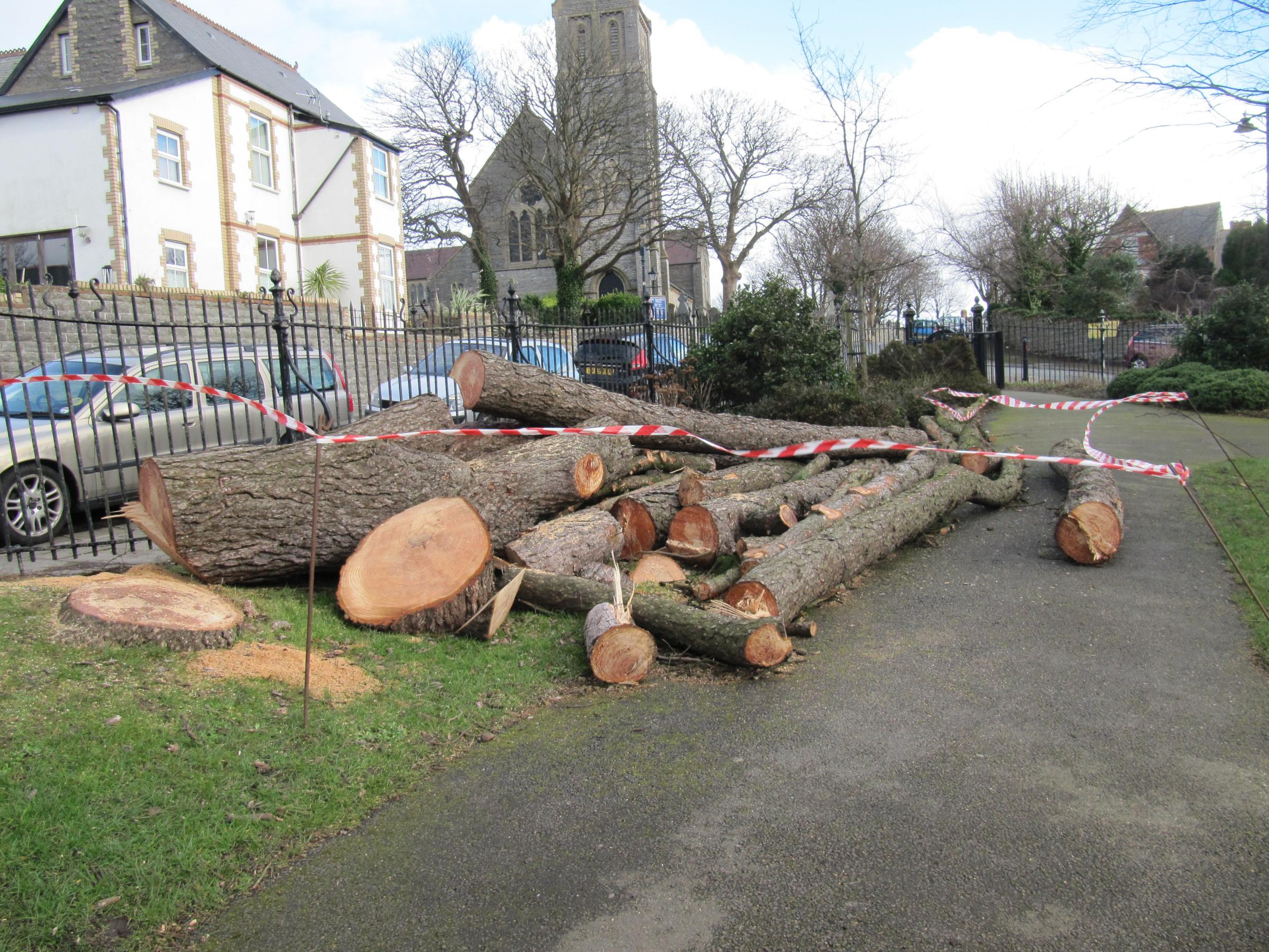 Storm damaged tree cut down in Belle Vue Park