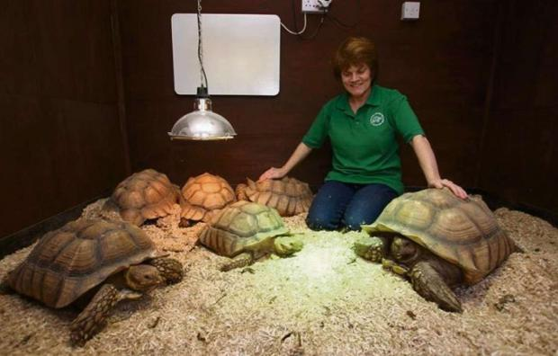 TORTOISES: Children will be given the chance to meet tortoises during the craft fair