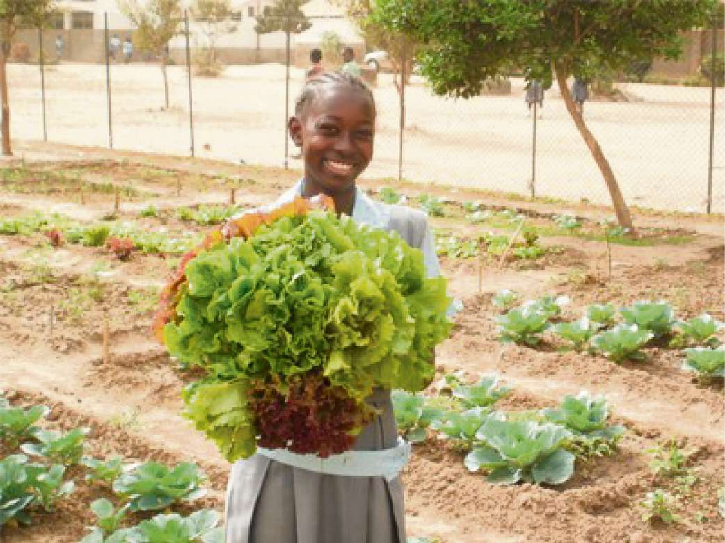 VEGETABLE PLOT: A Gambian schoolgirl with a lettuce grown in their garden (6554003)