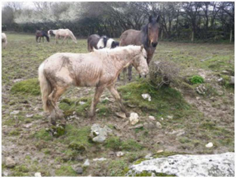 RESCUED: The RSPCA rescued 10 horses in the Vale of Glamorgan in 2013