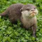 Penarth Times: Countryfile sparks debate with segment on otters