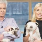 Penarth Times: Holly Willoughby took her adorable cats on This Morning and the response was purr-fect