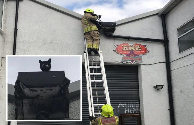 The rescue was carried out by the RSCPA and South Wales Fire and Rescue. Inset: The cat on the roof. Picture: RSPCA